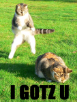 April_Fools_Lolcats